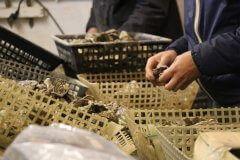 Huîtres et moules de la famille bideau